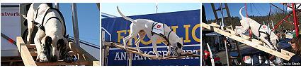 Flic Rettungshund thumb