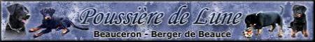 beauceron-agentszuechter
