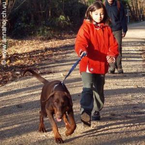 johanna-hundekurs-20081126-pb264186