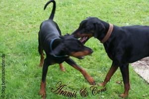 AramisCora-20090615-2009