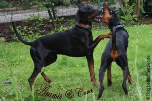 AramisCora-20090615-3018