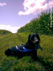 20090719-DogTrekking1