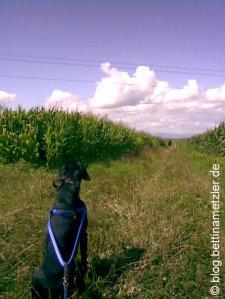20090719-DogTrekking2
