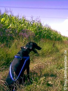 20090719-DogTrekking3